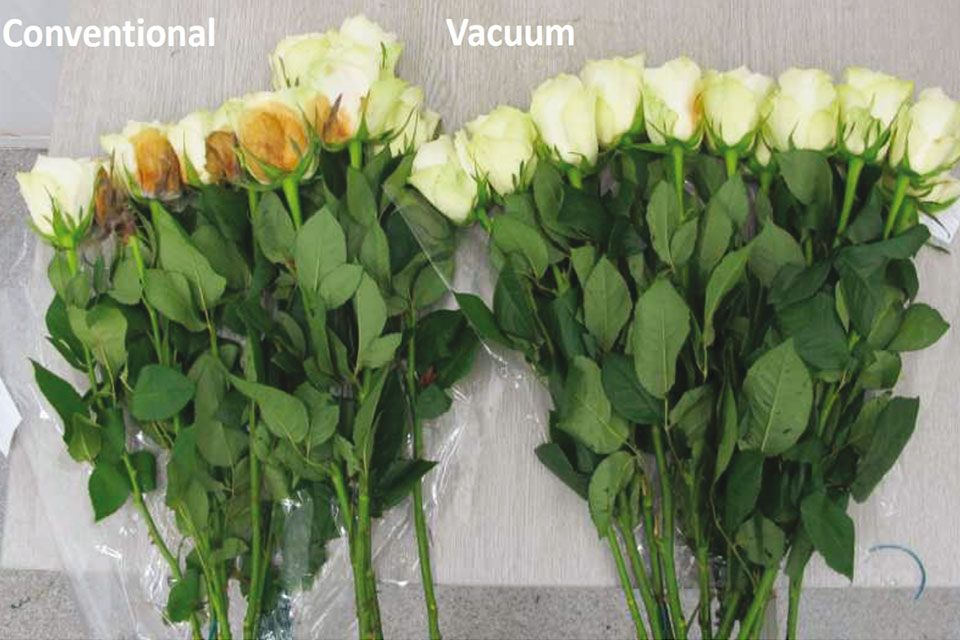 Weber Cooling Australia Vacuum Cooling Solutions for Flowers